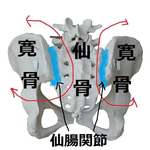 骨盤矯正の解説